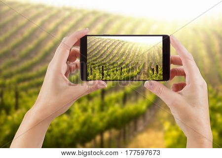 Female Hands Holding Smart Phone Displaying Photo of Grape Vineyard Behind.