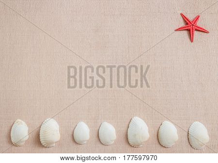 Seashells and starfish on light wooden background with copyspace