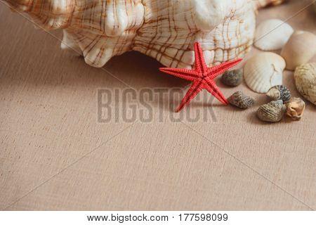 Seashells and starfish on light wooden background