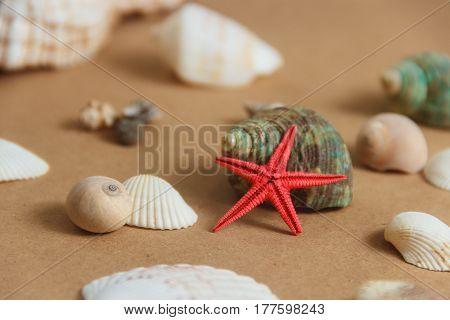Seashells and starfish on light background. Sea composition