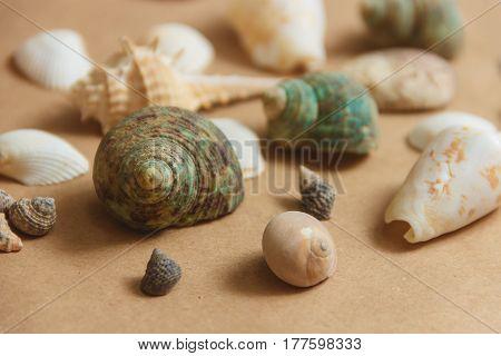 Many seashells on light background. Sea composition