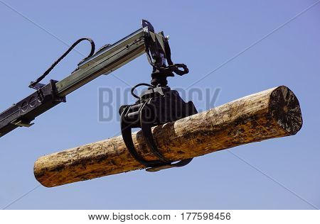 A Powerful Tree Logger at work on wood