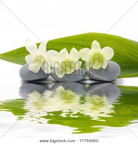 Reflection for zen stones and orchid ,green leaf