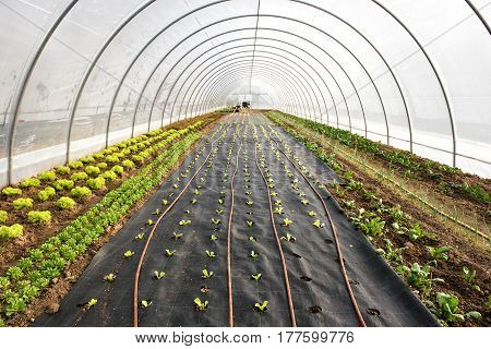 Newly Planted Seedlings In A Greenhouse In Spring