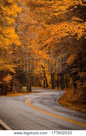 A road going through the autumn trees