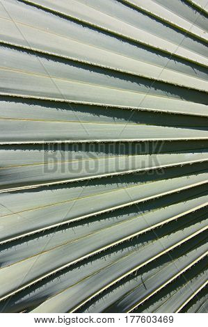 natural patterns and texture of a palm frond background