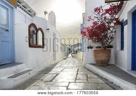 Oia town on Santorini island Greece. Traditional and famous houses and streets in the city over the Caldera Aegean sea