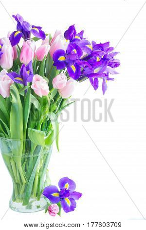 Bunch of blue irises and pik tulips in vase close up isolated on white background