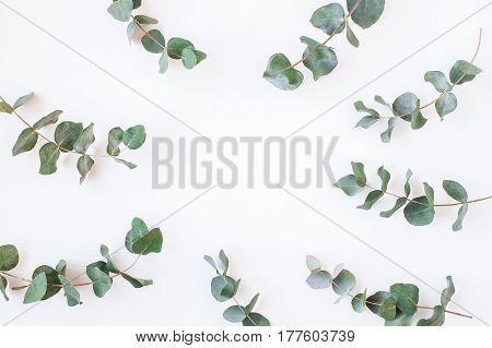 Eucalyptus. Frame made of eucalyptus branches. Flat lay top view
