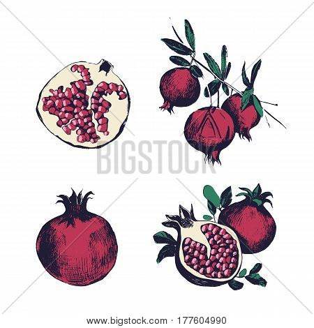 Pomegranate hand drawn set, Collection on white background, isolated fruit whole, cutaway, on a branch. Vector colorful vintage style illustration.