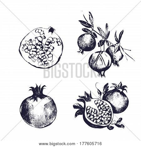 Collection on white background, isolated fruit whole, cutaway, on a branch. Pomegranate hand drawn set. Vector sketch vintage style illustration.