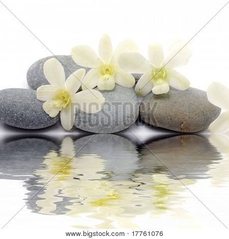 Reflection of white orchid with zen stones