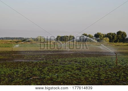 Irrigation System In Field Of Melons. Watering The Fields. Sprinkler