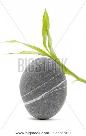 Zen stone with bamboo