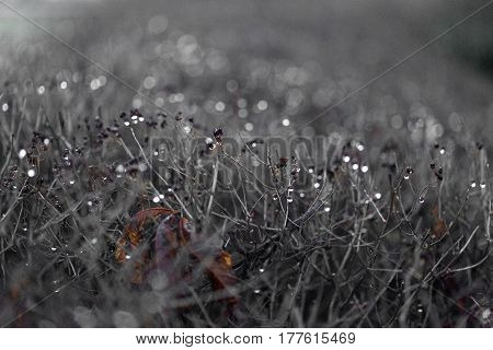 Background And Texture. Dry Plants. A Windbreak.
