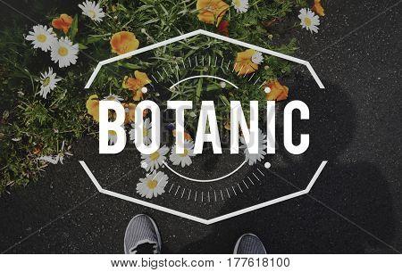 Bloom Botanic Flowers Freshness Concept