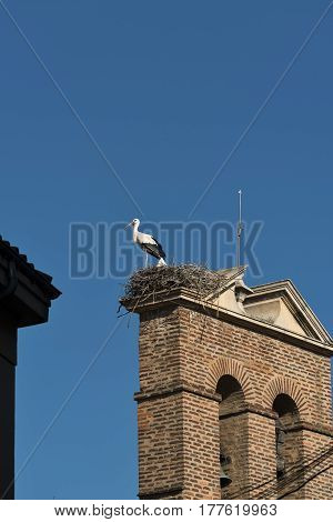 Leon (Castilla y Leon Spain): a stork in the nest at top of an old church belfry alond the Calle Conde Luna at summer