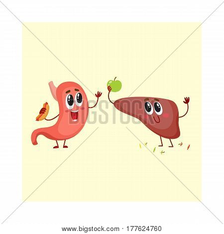 Cute and funny, smiling human stomach and liver characters, digestive system, isolated cartoon vector illustration. Healthy human stomach and liver characters, health care concept