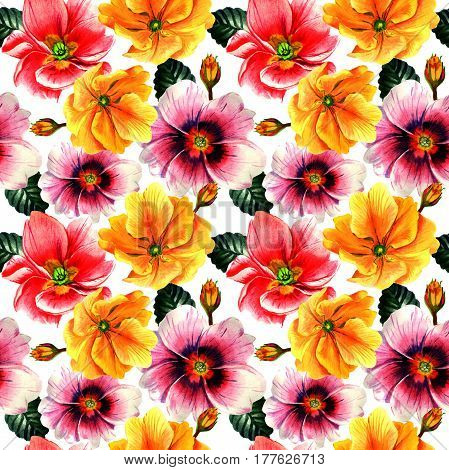 Wildflower Primrose flower pattern in a watercolor style isolated. Full name of the plant: Primrose or Primula. Aquarelle wild flower for background, texture, wrapper pattern, frame or border.