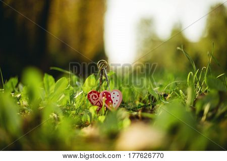 Two Gold Wedding Rings Lying On Green Grass