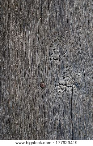 Old wood texture. Abstract background. With a nail and  tree knots
