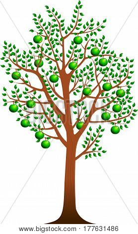 apple tree with ripe fruits illustration isolated on white background