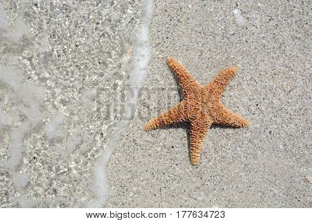 starfish laying in the water on the beach
