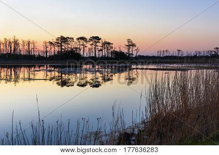 Salt Marsh Along Virginia Coastline - Assateague Island