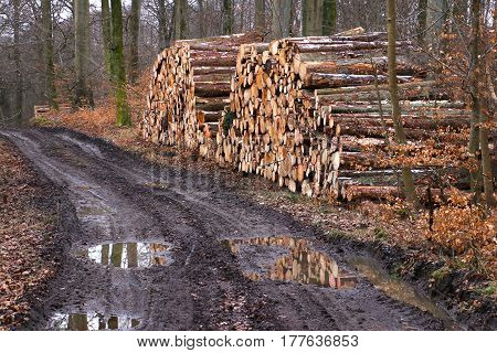 Firewood Stack of freshly felled trees and ponds