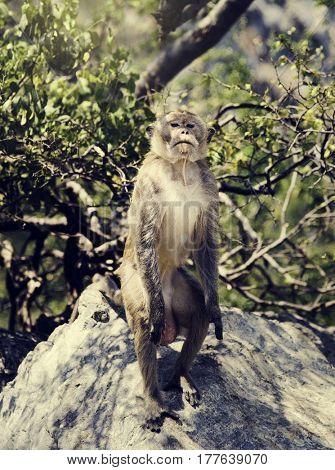 Monkey animal mammal nature tropical