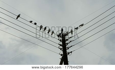 electricity post with pidgeons on top of it