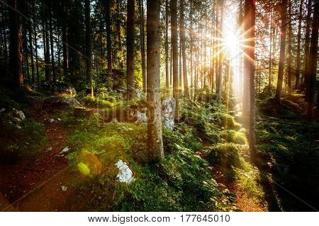 Magical woods in the morning sun. Fairy forest in autumn. Dramatic scene and picturesque picture. Wonderful natural background. Location place Germany Alps, Europe. Explore the world's beauty.