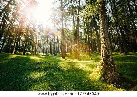 Magical woods in the morning sun. Fairy forest in springtime. Picturesque day and gorgeous scene. Creative natural wallpaper. Location place Italy alps, Europe. Explore the world's beauty.