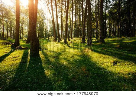 Magical woods in the morning sun. Fairy forest in springtime. Picturesque day and gorgeous scene. Wonderful image. Outdoor vacation. Location Italy alps, Europe. Explore the world's beauty.