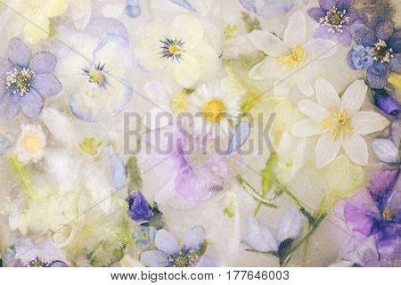background of frozen spring flowers