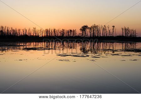 Salt Marsh Bordered by Trees at Sunrise
