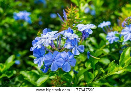 Close-up on blue flowers, background, green,beautiful,flower  nature