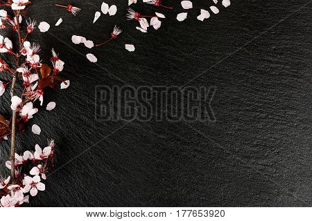 almond tree twig on black stone texture