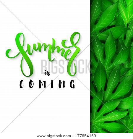 vector illustration of hand lettering poster - summer is coming with paper sheet on a background aralia leaves.