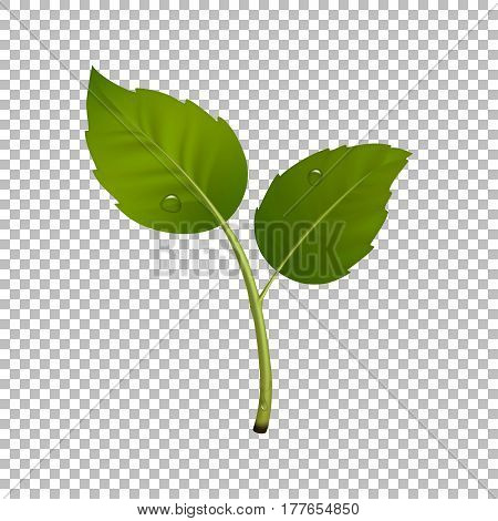 Green sprout design element. Vector image with leaf pair and drops of dew. Ecology concept, realistic icon. EPS10 illustration.
