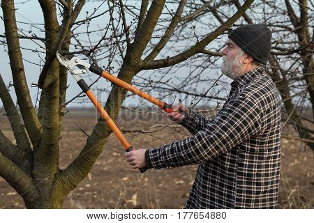 Agriculture, Pruning In Orchard, Adult Man Working