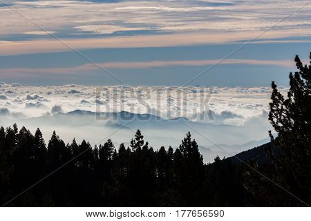 A sea of clouds is illuminated behind the forest