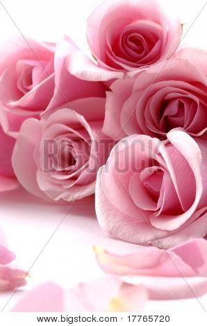 Rand van meerdere roze rozen