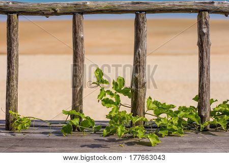 Wooden Fence Over Looking Paradise Beach.