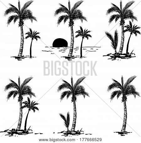Vector set of a hand drawn palm trees. Design element for t-shirt prints. Tropical nature element.