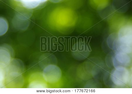 Green blurred background, the bokeh effect.
