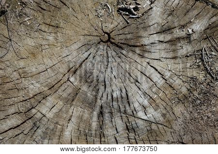 the texture of the old cut years of wood