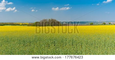 Spring landscape with flowering rape-seed fields near Dnepr city Ukraine
