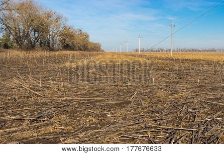 Landscape with harvested sunflowers field in Ukraine