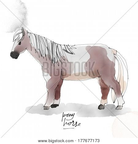 Pony Horse. Watercolor animal drawing collection